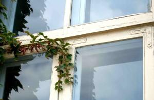 Mit Pflanzen bewachsenes Holzfenster.