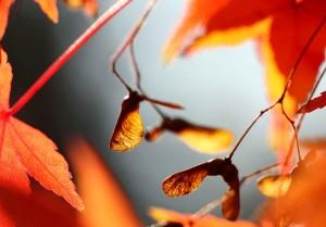 Herbstlich gefärbte Blätter.