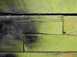 Holzalgen befallen eine Holzfassade.