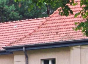 Favorit Neues Dach – Kosten und Tipps - Dein Bauguide IT21