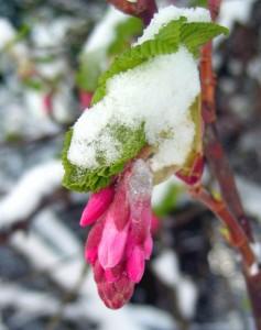 Auch Pflanzen brauchen im Winter schutz vor Schnee und eisigen Temperaturen.