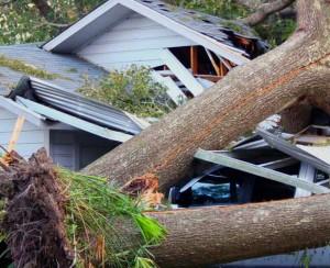 Sturmschäden und umgefallene Bäume.