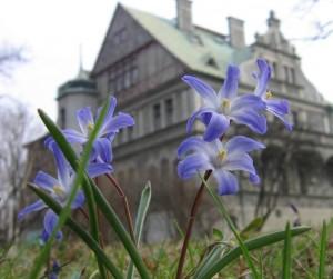 Frühlingsblumen vor einer Villa.