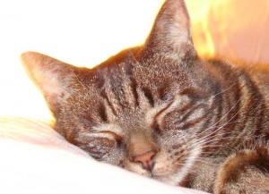 Katze schläft gemütlich auf einem Kissen.