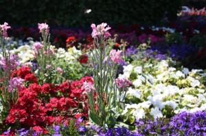 Viele bunte Blumen sind schön anzuschauen, können aber giftig sein und haben in einem kindersicheren Garten nichts zu suchen.